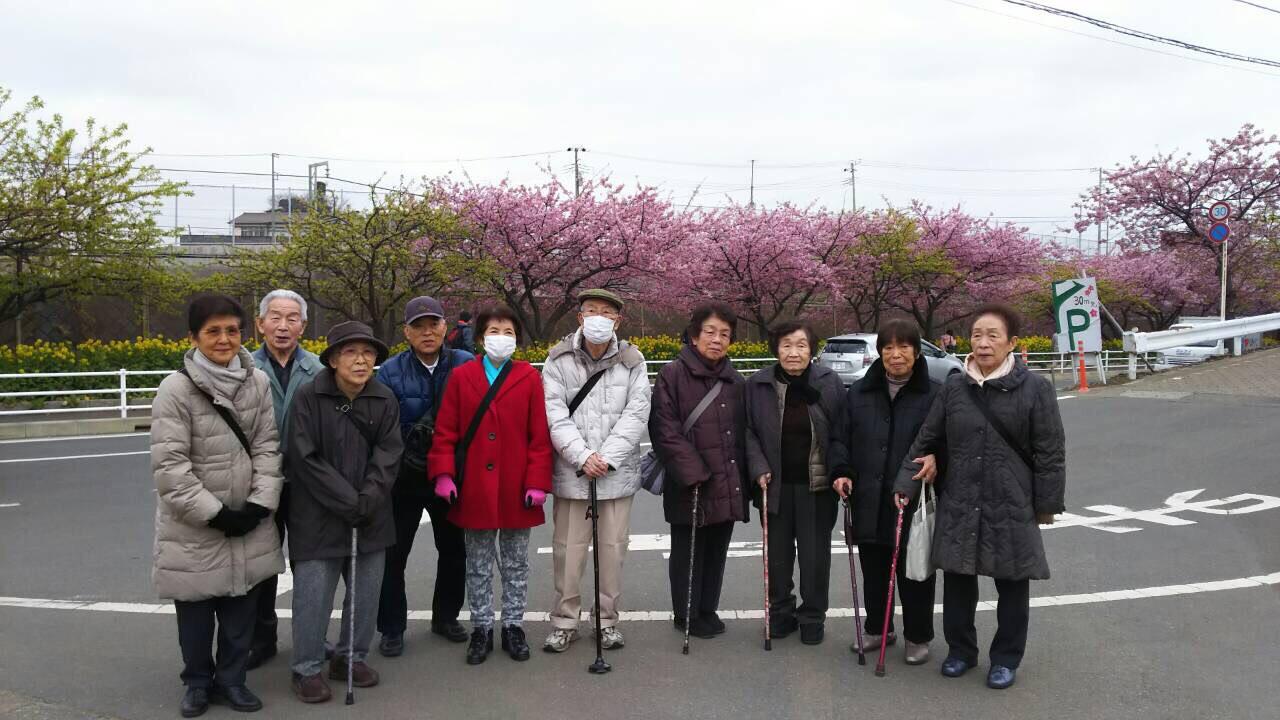 河津桜お花見イベント